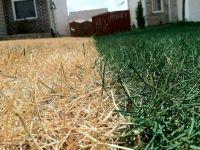 spraypaintgrass